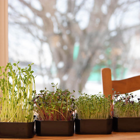 Simple, convenient, beautiful microgreen grow kits