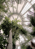 Palm House - plakat