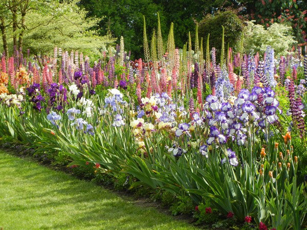 Landscaping with iris iris flowers daylily flowers for Kingsbury garden designs