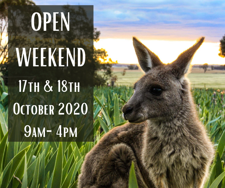 Open days 2020 - Bring on the spring bling