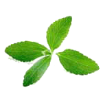 stevia ingredient
