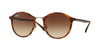 RayBan RB4242 620113 LIGHT HAVANA Specs at Home