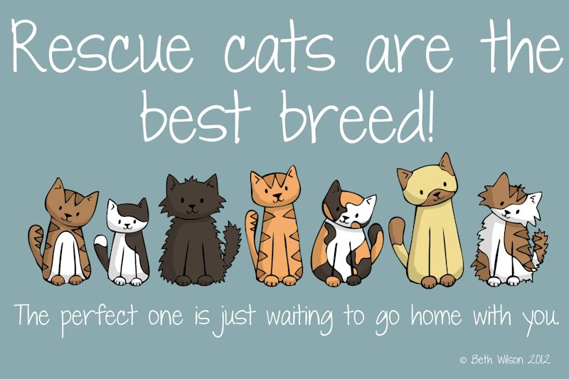 Rescue-Cats-Charity