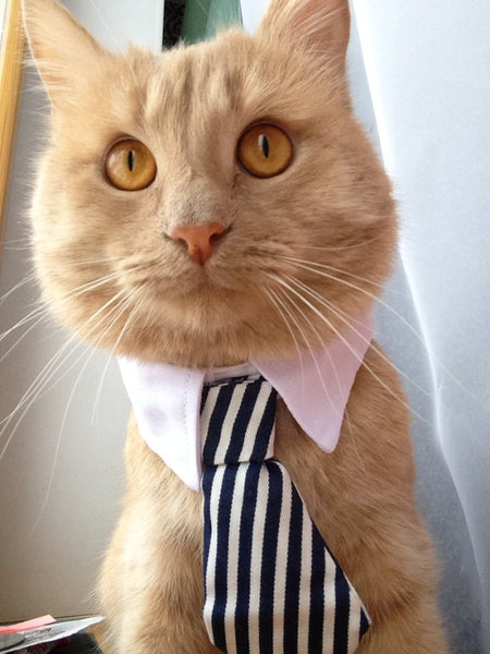 Cute Cat's Adjustable Small Neckties