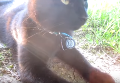 Mini HD Cat Collar Camera
