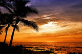 Nostara image of golden sunset with palm tree by the beach