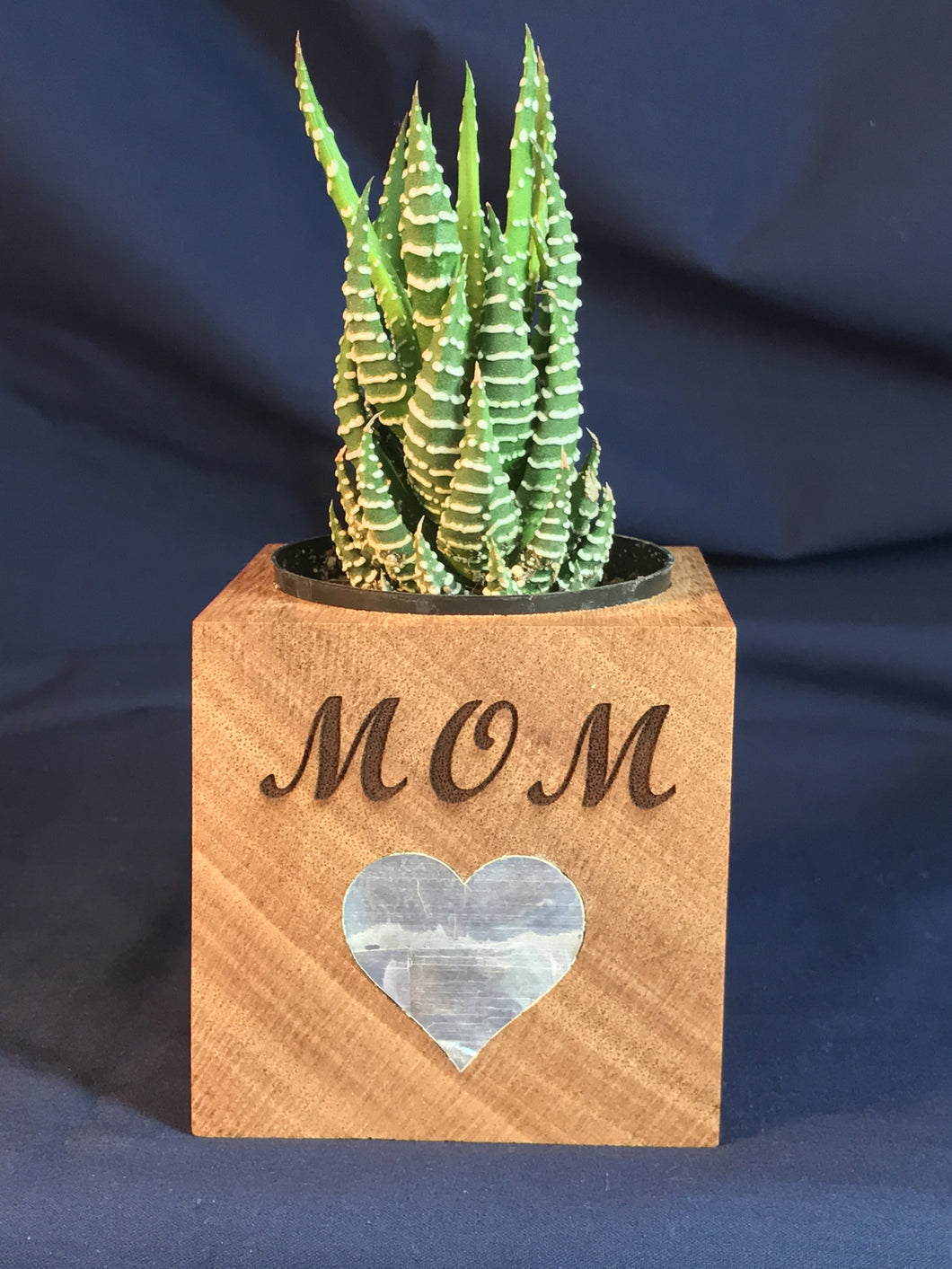 Mother's Day Planter Cube - Red Paua Shell