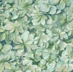 Hydrangea Blooms Wallpaper