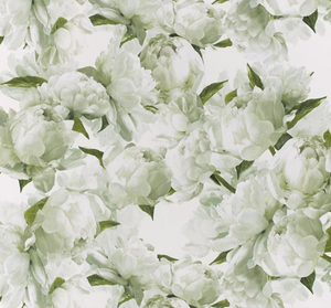 Peonia Wallpaper