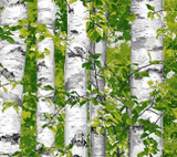 Square swatch fabric from Naturescapes collection in birch trees (white trees and bright green leaves)