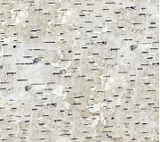 Square swatch The Great Outdoors Flannel in birch bark (white/grey/black coloured fabric mimicking birch bark texture)