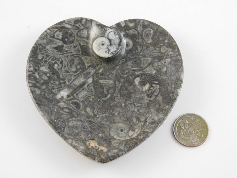 Marbleized Orthoceras Fossil Heart Dish - Moroccan Village