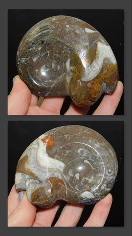 Marbleized Ammonite Fossil