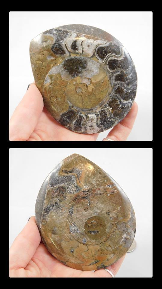 Marbleized Ammonite Slab - Moroccan Village