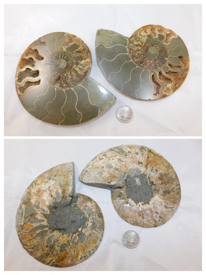 Fossil Ammonite Halves - Moroccan Village