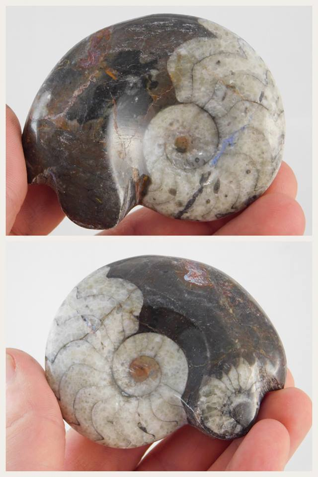 Fossilized Ammonite - Moroccan Village