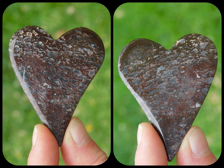 Dino Bone Heart - Moroccan Village