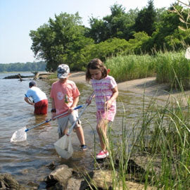Critters, Coves & Currents Camp - August 3 - 7 (ages 6 - 8)