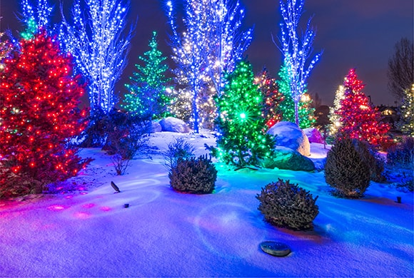 All colors of super mini lights on trees, showing their spotlight tip effect on the snow