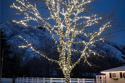 super mini led string lights wrapped on a large tree. light color is Winter White