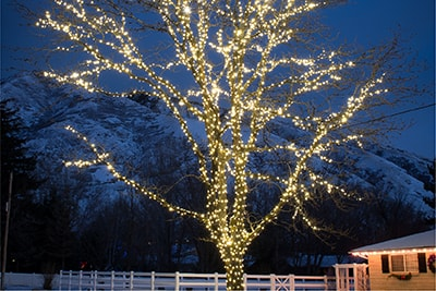 super mini led string lights wrapped on a large tree. light color is Warm Clear