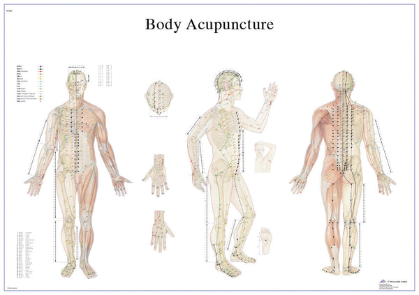 Anatomical Chart - acupuncture body, paper