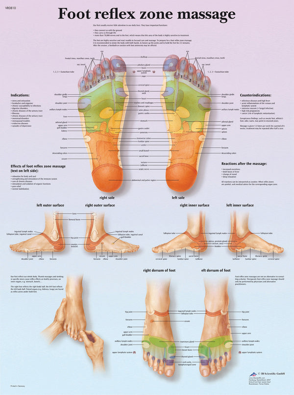 Anatomical Chart - foot massage, reflex zone, laminated