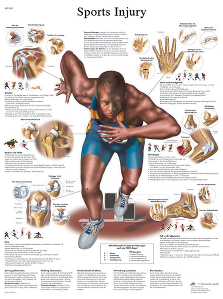 Anatomical Chart - sports injuries, laminated