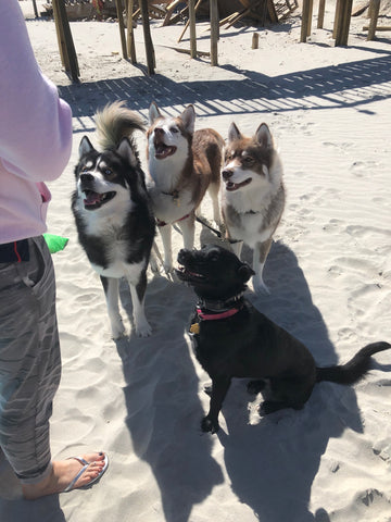 Puppies on Pawley's Island