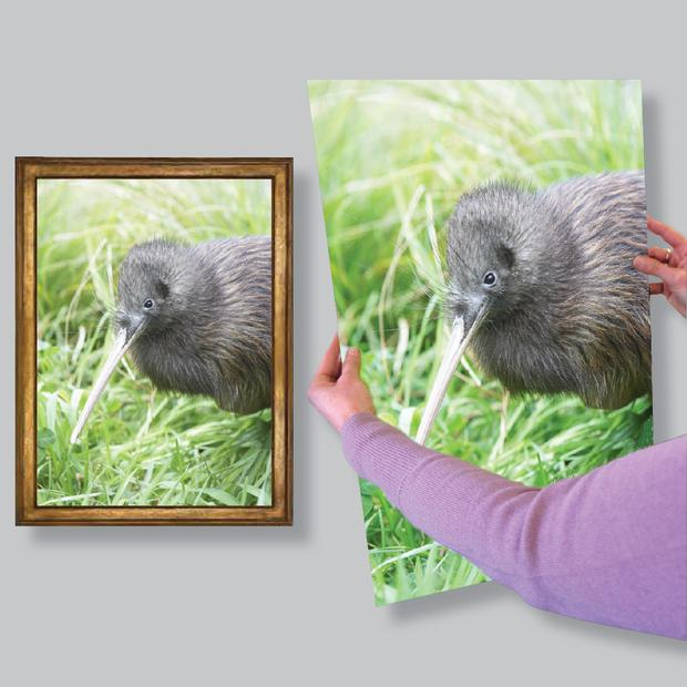 Giclée Archival Art Prints - Mid Size (A4 & A3) Prints
