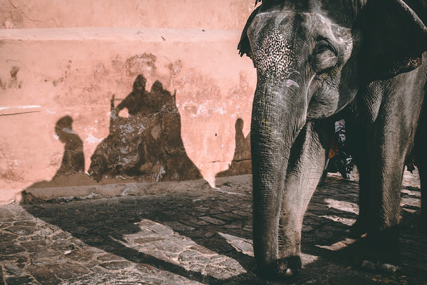 Things to do in Jaipur - what to expect and what to wear -  Elephant Amber Fort