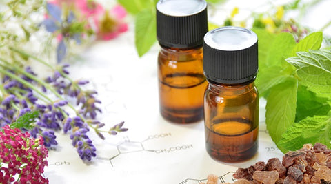 Essential Oils for Animals and their Humans