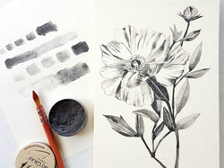 Botanical Illustration in Tonal Value by Drew Europeo