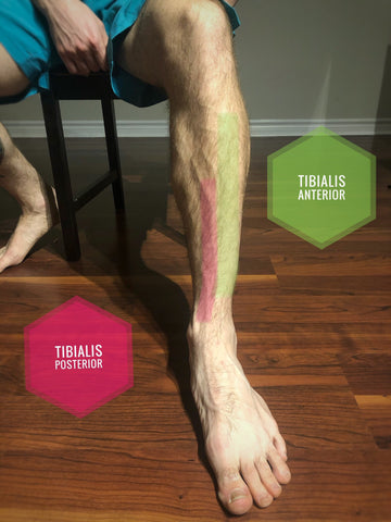 Run Little Monkey - shin splints muscles