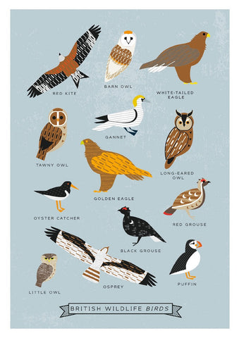 British Birds Postcards