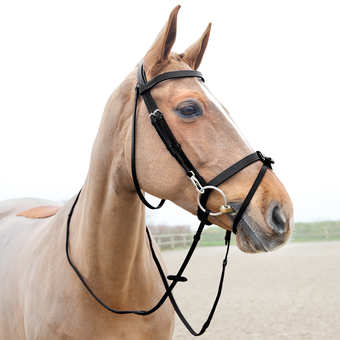 Horze Sparta Hunter Bridle - Horse & Hound Tack Shop & Pet Supply