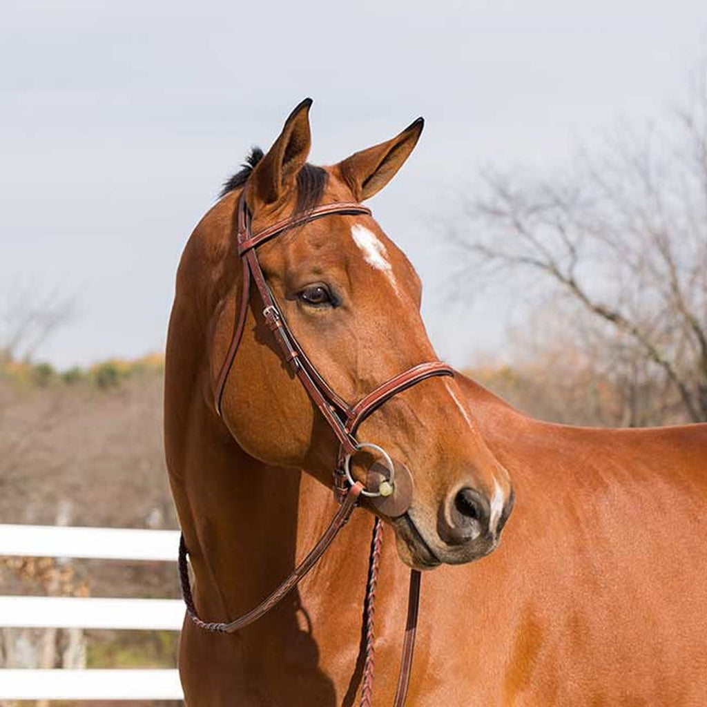 Horze Harrison Bridle - Horse & Hound Tack Shop & Pet Supply