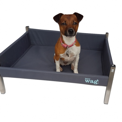 Henry Wag Elevated Dog Bed - Horse & Hound Tack Shop & Pet Supply