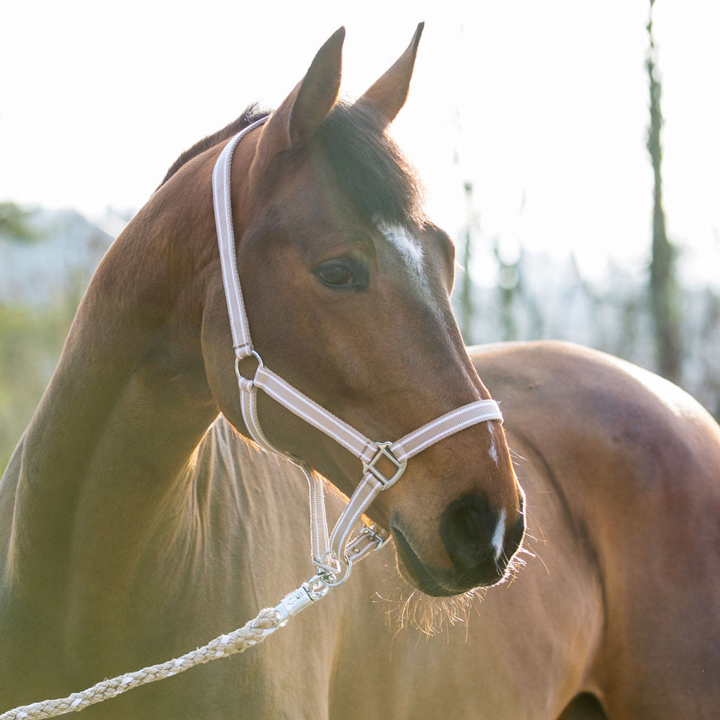 Horze Nice Halter - Horse & Hound Tack Shop & Pet Supply