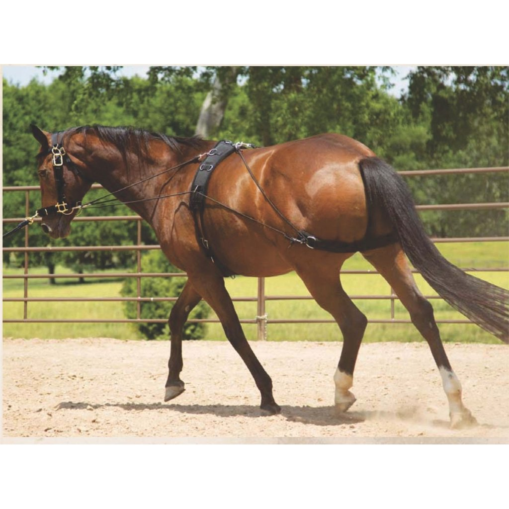 Mustang Balance Training System - Horse & Hound Tack Shop & Pet Supply