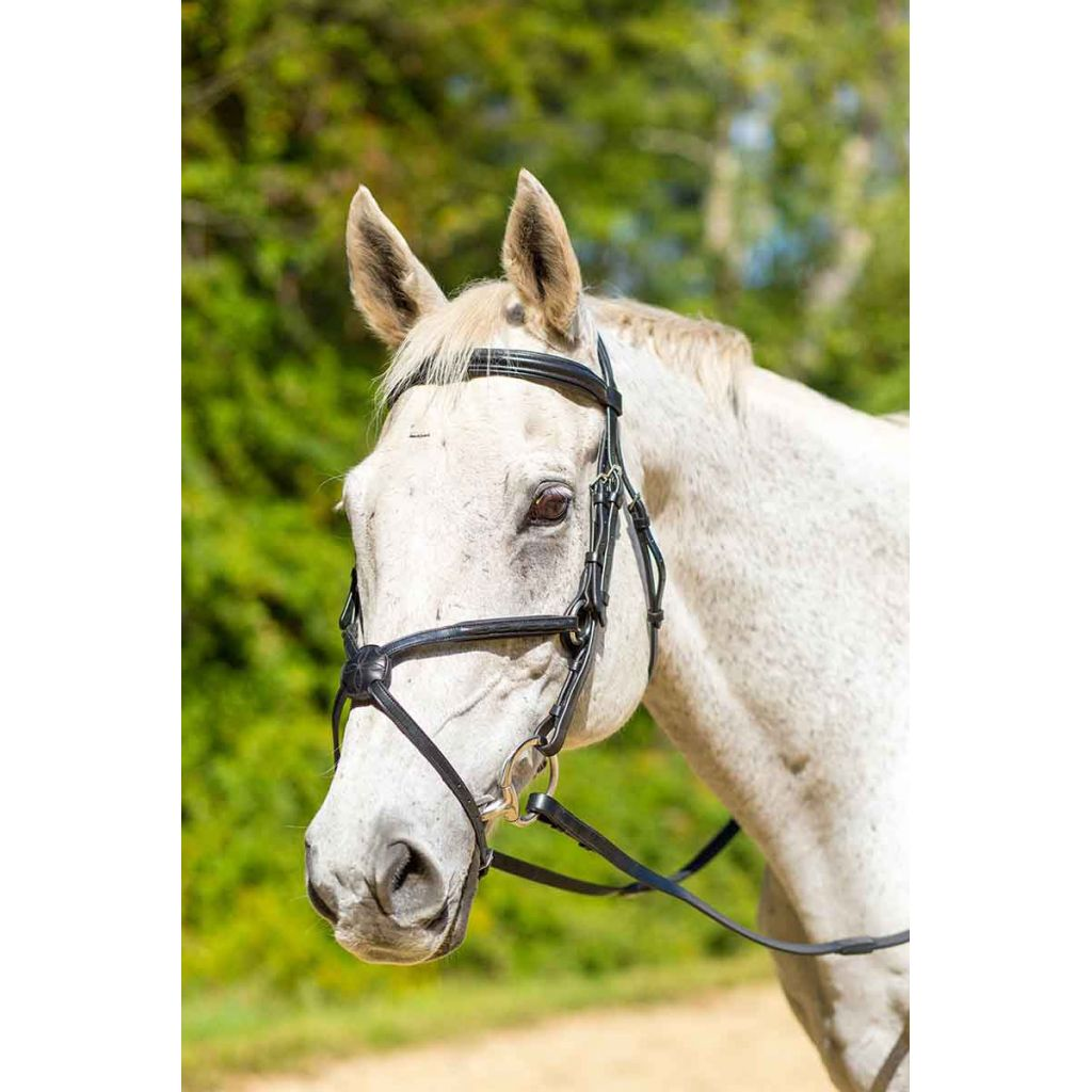 Shires Woodside Bridle