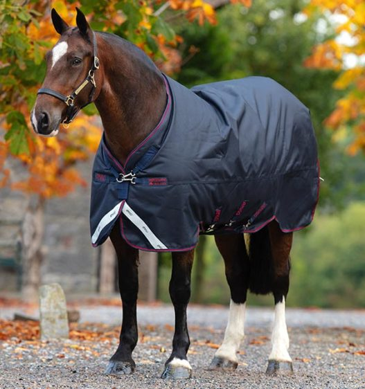 Amigo® Bravo 12 XL - Horse & Hound Tack Shop & Pet Supply