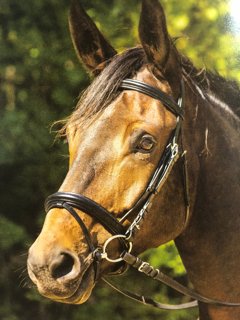 Shires Equestrian Avignon Aspen Bridle - Horse & Hound Tack Shop & Pet Supply
