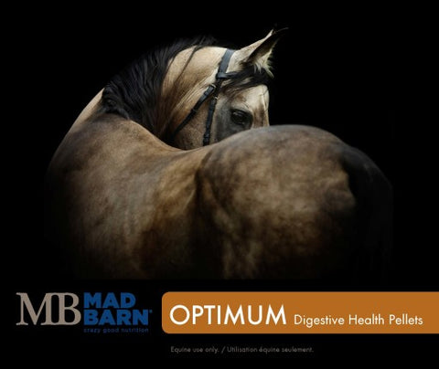 Mad Barn Optimum Digestive Health – Pellets - Horse & Hound Tack Shop & Pet Supply