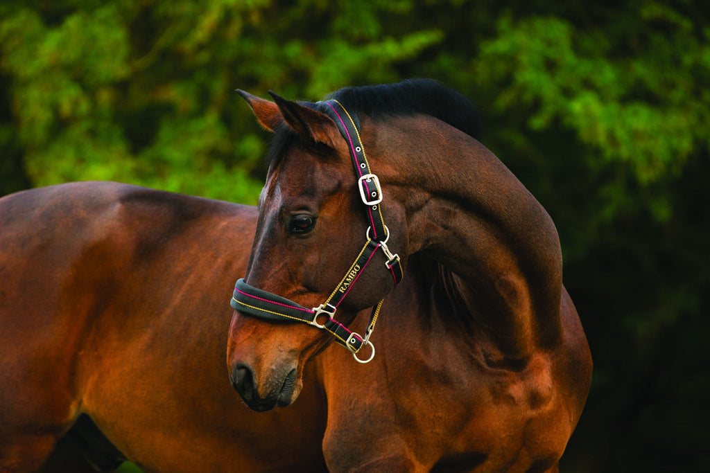 Rambo Padded Headcollar - Horse & Hound Tack Shop & Pet Supply