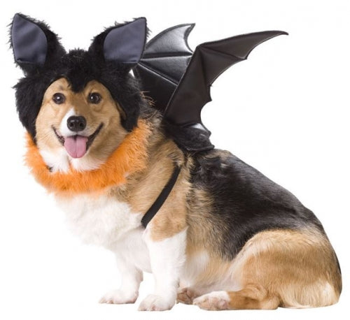 Animal Planet Bat Dog Costume