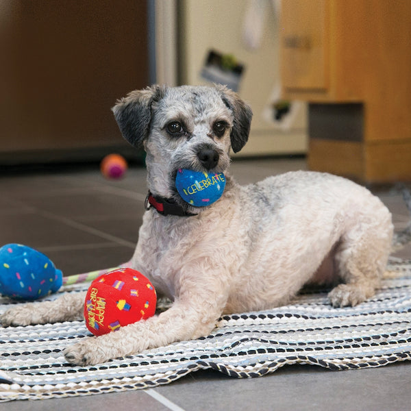 KONG Occasions Birthday Balls Dog Toy