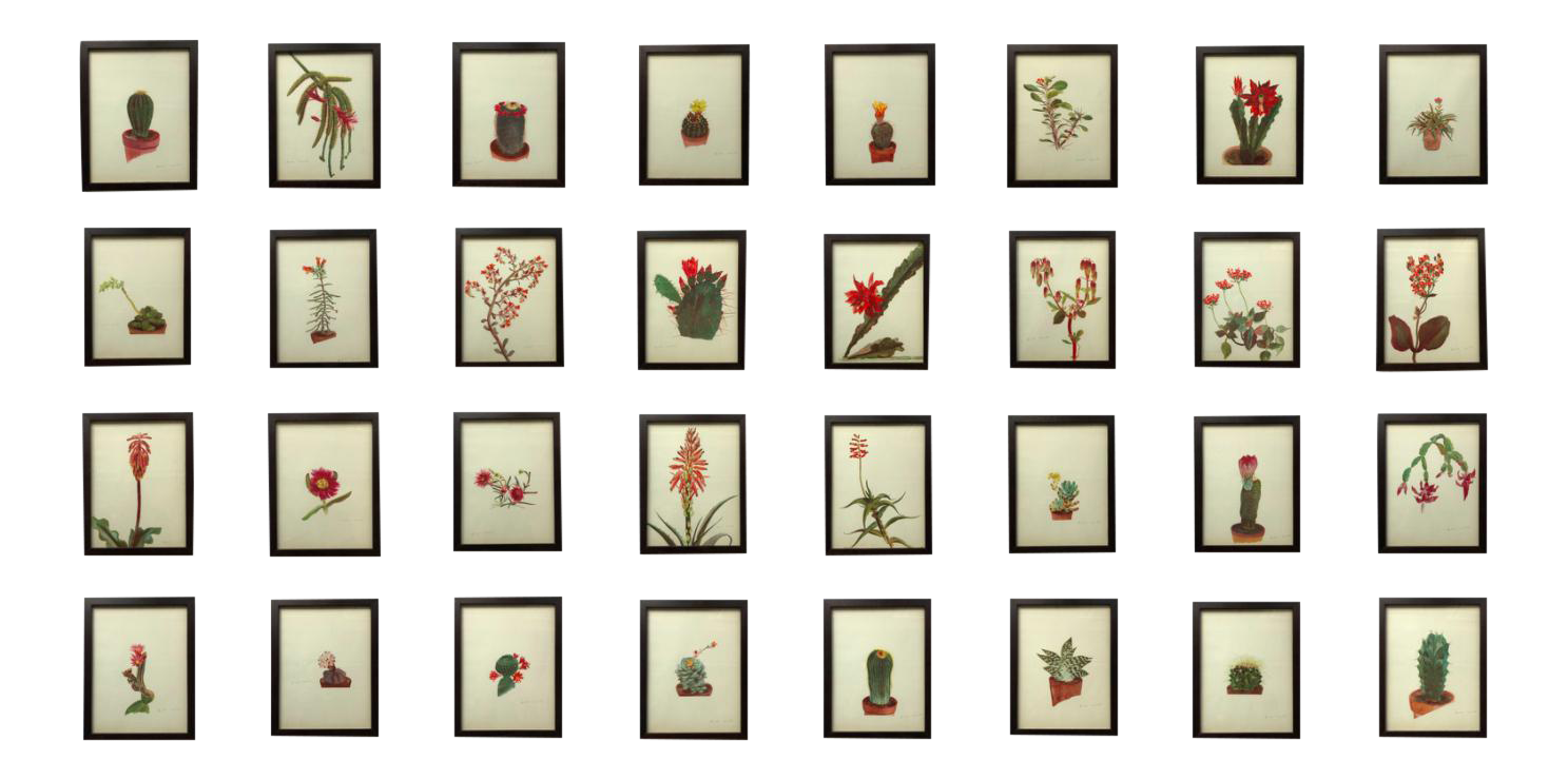 Framed Rock Plants - Set of 32