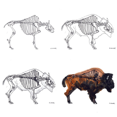 Bison skeleton and form analysis sketches by Eric Jacoby