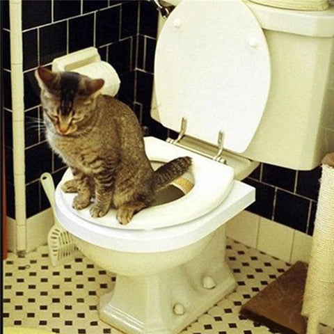 Cat In-Toilet Seats Training Kit - No more cat box!